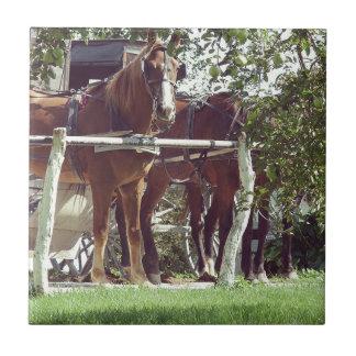 Amish hästar på hitchingen postar runt om äpplen kakelplatta