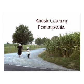 Amish landPennsylvania PA Vykort