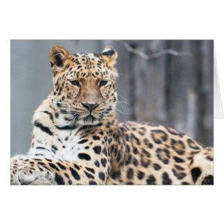 Amur Leopard Hälsningskort