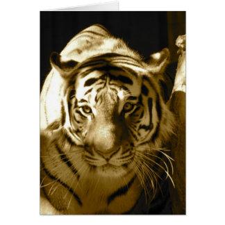 Amur tiger i Sepia Hälsningskort