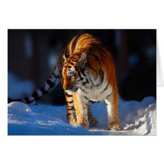 Amur tiger på vitsnö hälsningskort