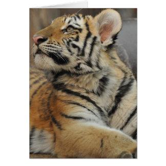 Amur tigerunge hälsningskort