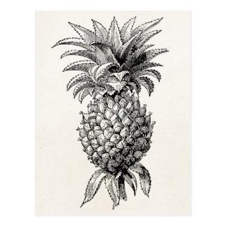 Ananas för illustration för vintage1800sananas vykort
