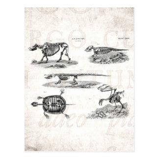 Anatomi för antikvitet för skelett för vykort