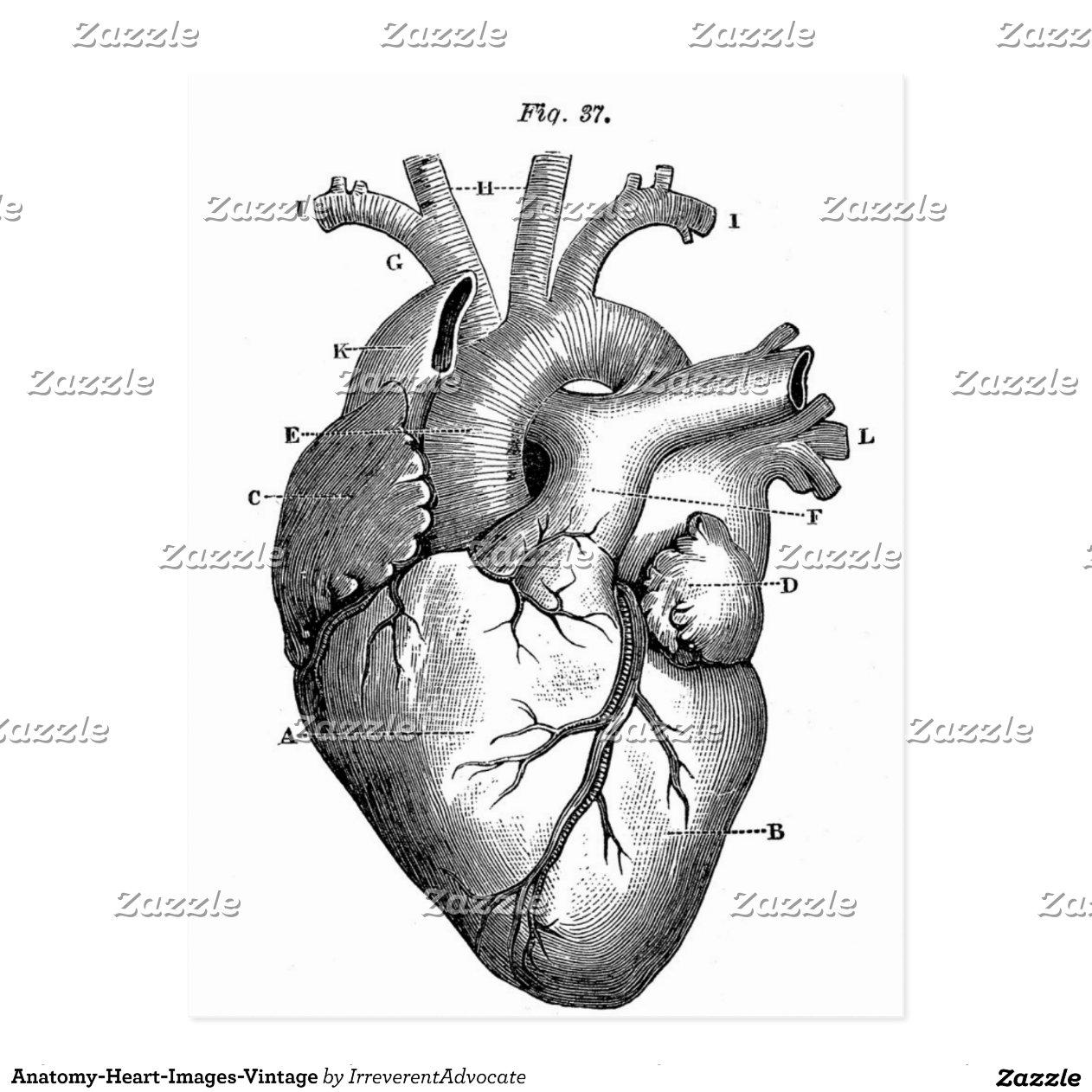 Berühmt Menschliches Herz Beschriftete Galerie - Anatomie Von ...
