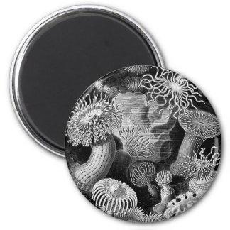 Anemoner för hötorgskonstvintageillustration magnet