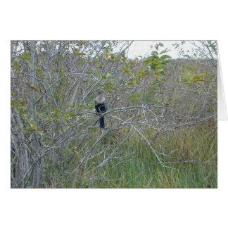 Anhinga Florida Everglades, 1999 Hälsningskort