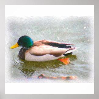 Anka i en pond_Painting_1 Print