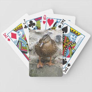 Anka på en vägg som leker kort spelkort