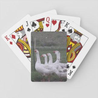 Anka som leker kort kortlek