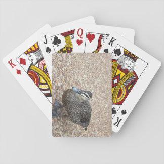 Anka som leker kort spelkort