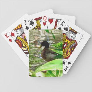Anka som leker kort, standarda indexansikten casinokort