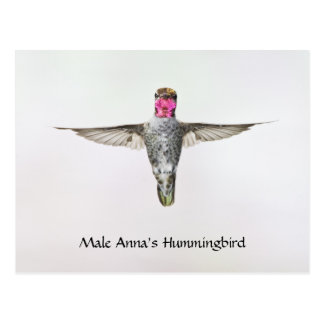 Annas Hummingbirdvykort Vykort