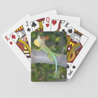 Anolislividus som leker kort spelkort