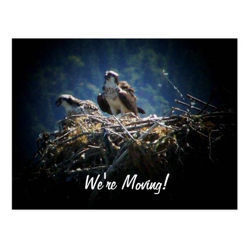 Anpassningsbar är vi den röra nya hem- fågeln vykort