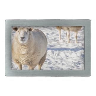 Anseende för två får i snö under vinter