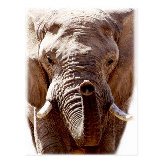 Ansikte för huvud för Wellcoda vildelefant djurt Vykort