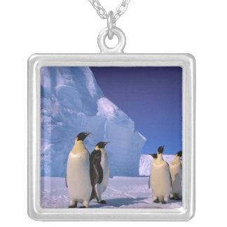 Antarktis australiensiskt Antarcticterritorium, 7 Silverpläterat Halsband