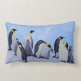 Antarktis Emporer pingvin ((aptenodytesen Kudde