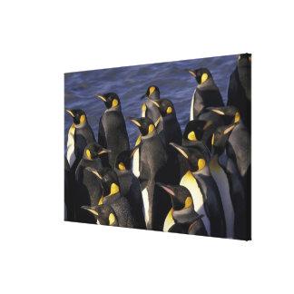 Antarktis södra Georgia ö. Kungpingvin 2 Canvastryck