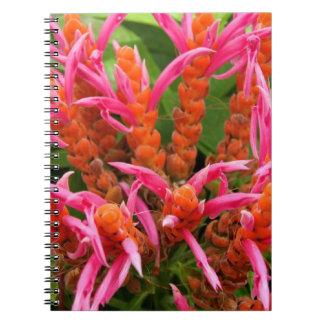 Anteckningsbok - korall Aphelandra