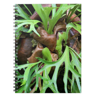 Anteckningsbok - Staghorn Fern