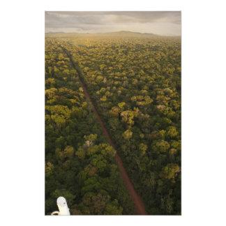 Antennen beskådar av rainforest. Iwokrama reserver Fotokonst