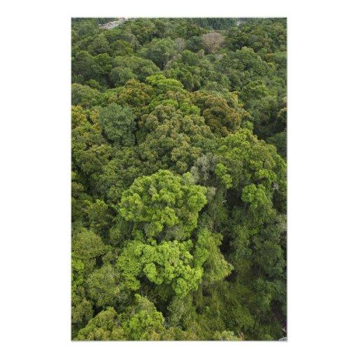 Antennen beskådar av rainforest. Iwokrama reserver Konstfoto