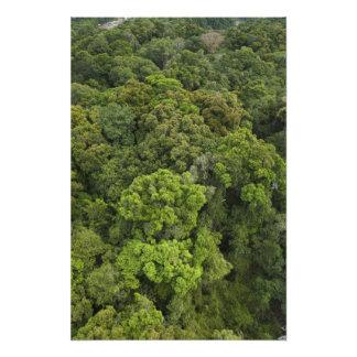 Antennen beskådar av rainforest. Iwokrama reserver Fototryck