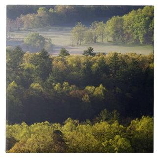 Antennen beskådar av skog i den Cades coven, under Kakelplatta