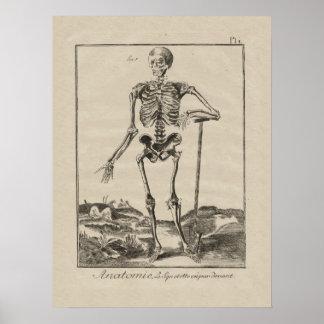 Antik skelett- människaanatomiaffisch poster