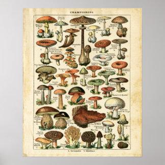 Antika franska champinjoner kartlägger trycket poster