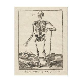 Antikt skelett från Diderots uppslagsverk Canvastryck