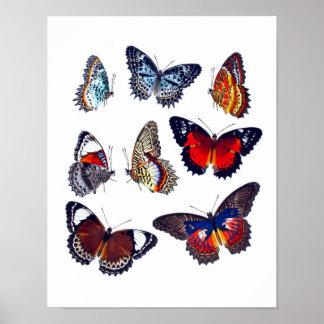 Antikt tryck no.12 för fjärilsnaturhistoriakonst poster