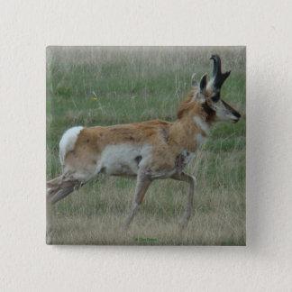 Antilop för A0032 Pronghorn Standard Kanpp Fyrkantig 5.1 Cm