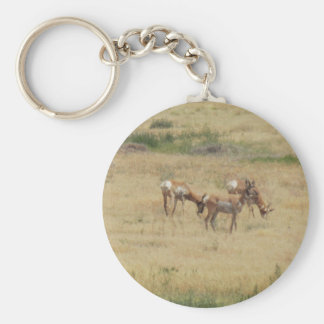 Antilop som Frolicking i Utah Rund Nyckelring