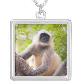 Apa i djungel av den Ranthambore nationalparken Silverpläterat Halsband
