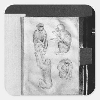 Apor från det Vallardi album Fyrkantigt Klistermärke