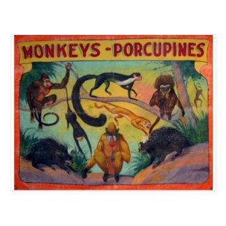 Apor och Porcupines Vykort