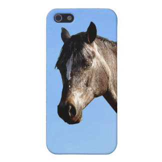 Appaloosa iPhone 5 Cases