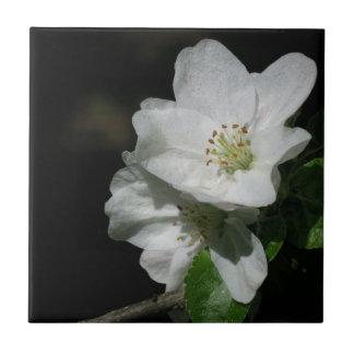 Apple blommar liten kakelplatta