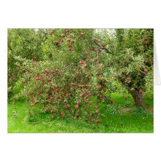 Apple fruktträdgård hälsningskort