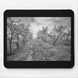 Apple fruktträdgård i vår musmatta