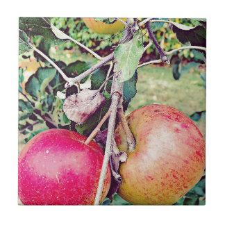 Apple fruktträdgård kakelplatta