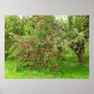 Apple fruktträdgård poster