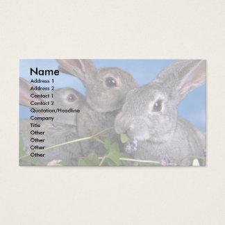 Aprikos och blåttRex kanin Visitkort