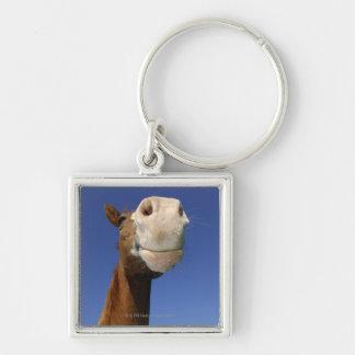 Arabisk häst, Bayern, Tyskland Fyrkantig Silverfärgad Nyckelring