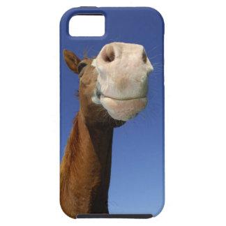 Arabisk häst, Bayern, Tyskland iPhone 5 Case-Mate Fodral