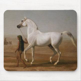Arabisk hingst för vit musmatta