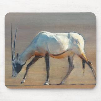 Arabisk oryxantilop 2010 musmatta